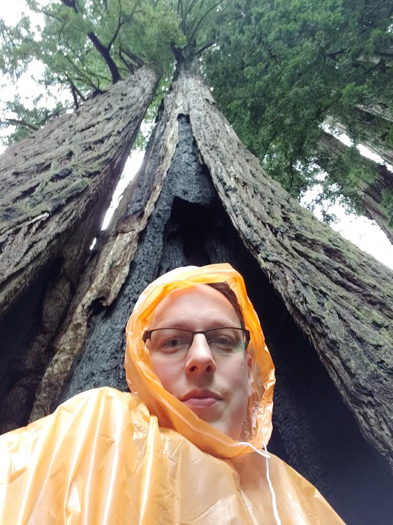 In the foreground a man clad in rain gear stretching up behind him into the sky a massive redwood tree.