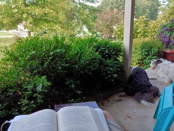 A shaded front porch looks upon a verdant scene of oak, crab apple, boxwood, and purple blooming clematis. To the front of the picture, on a wooden bench, rests an open book with penciled annotations. To the right, two dogs rest looking upon the front yard.